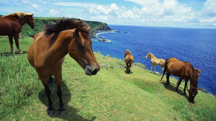与那国馬と一緒に海遊び!進化感覚のマリンアクティビティー